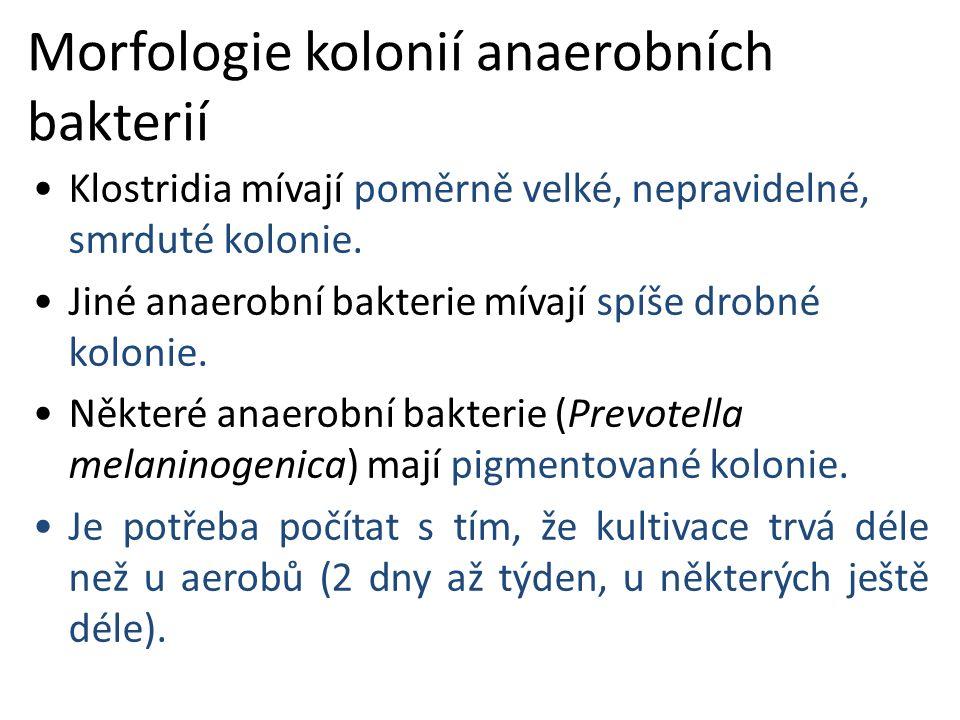 Morfologie kolonií anaerobních bakterií