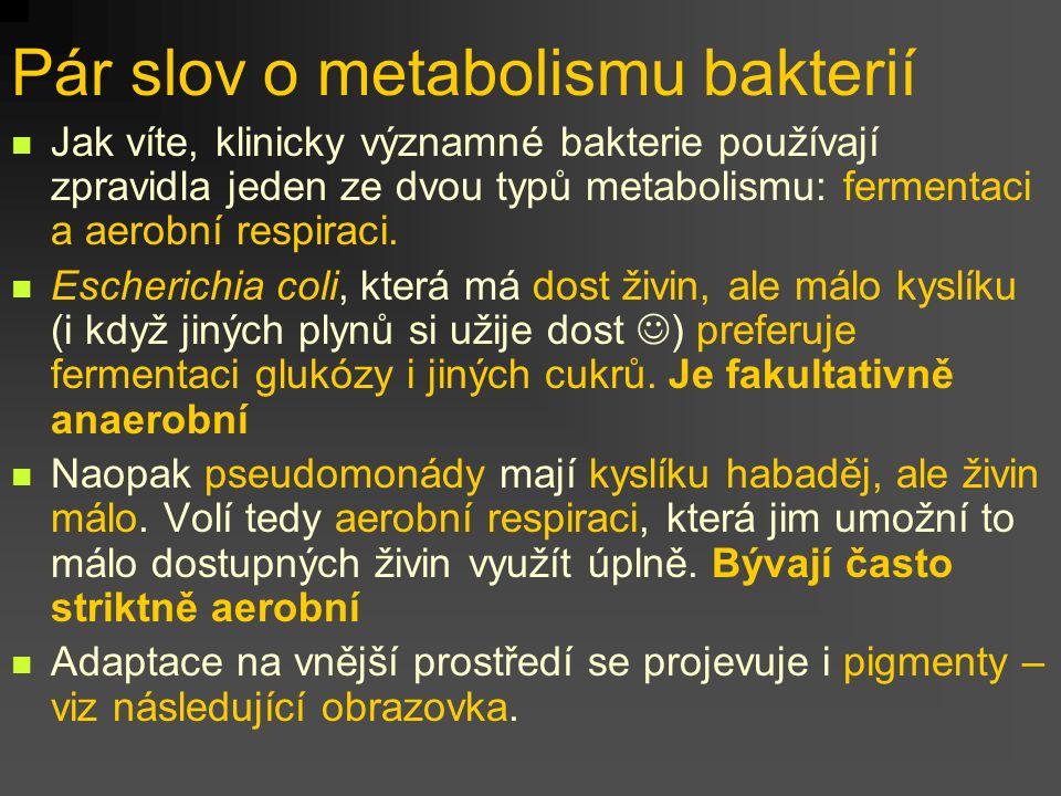Pár slov o metabolismu bakterií