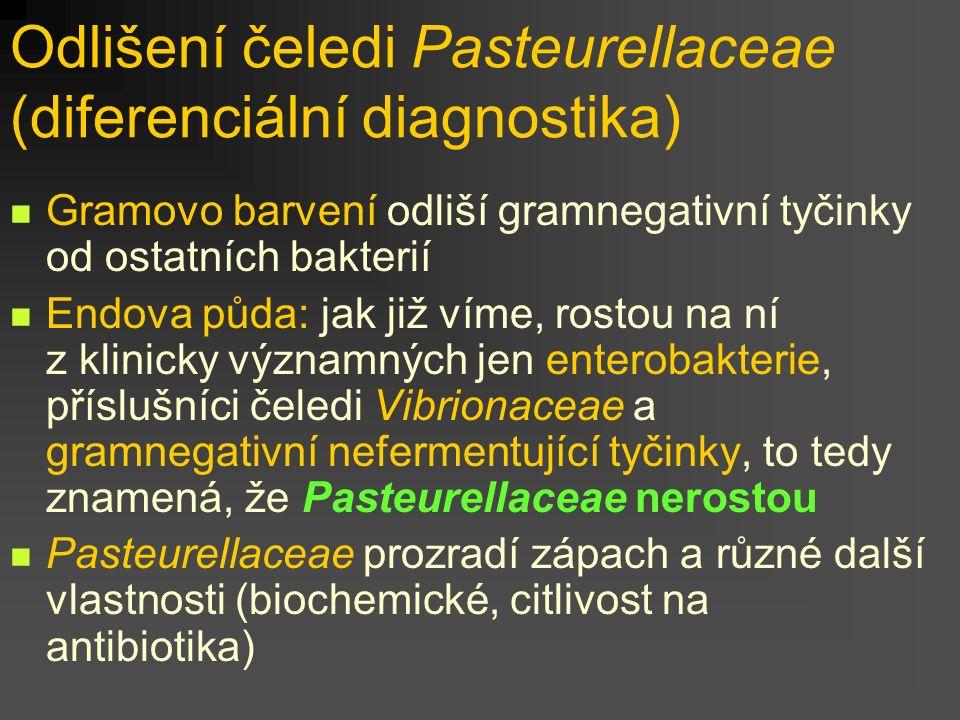 Odlišení čeledi Pasteurellaceae (diferenciální diagnostika)
