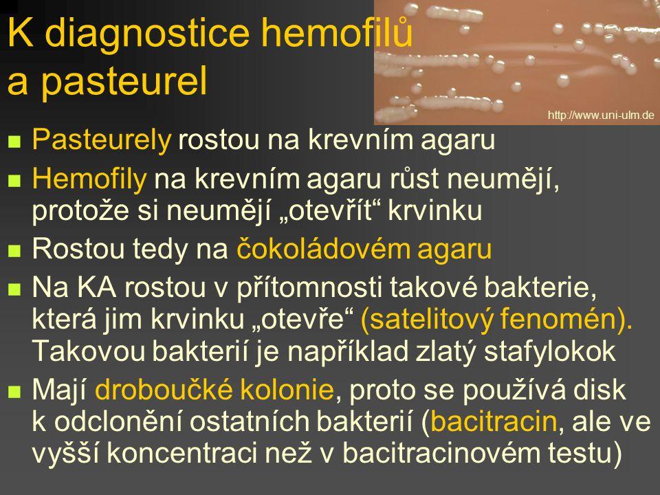 K diagnostice hemofilů a pasteurel