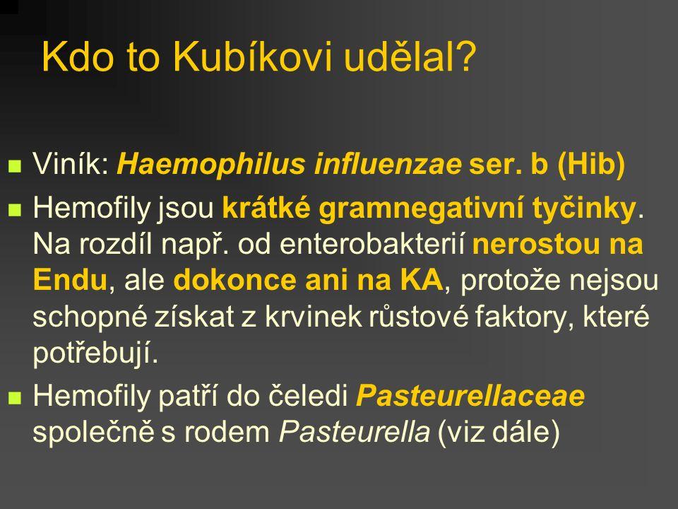 Kdo to Kubíkovi udělal Viník: Haemophilus influenzae ser. b (Hib)