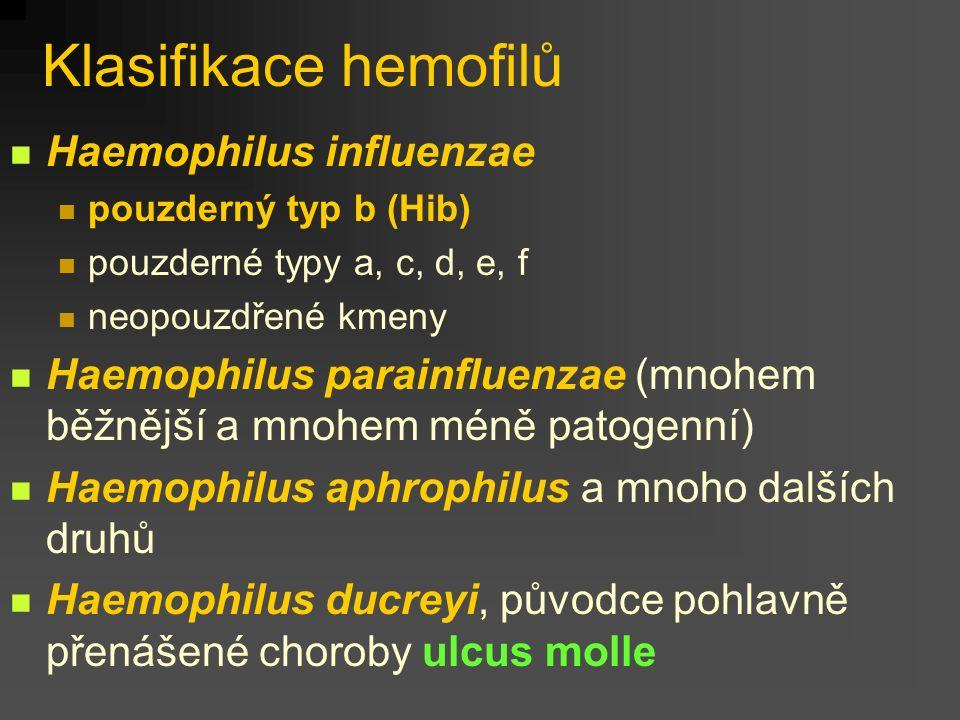 Klasifikace hemofilů Haemophilus influenzae
