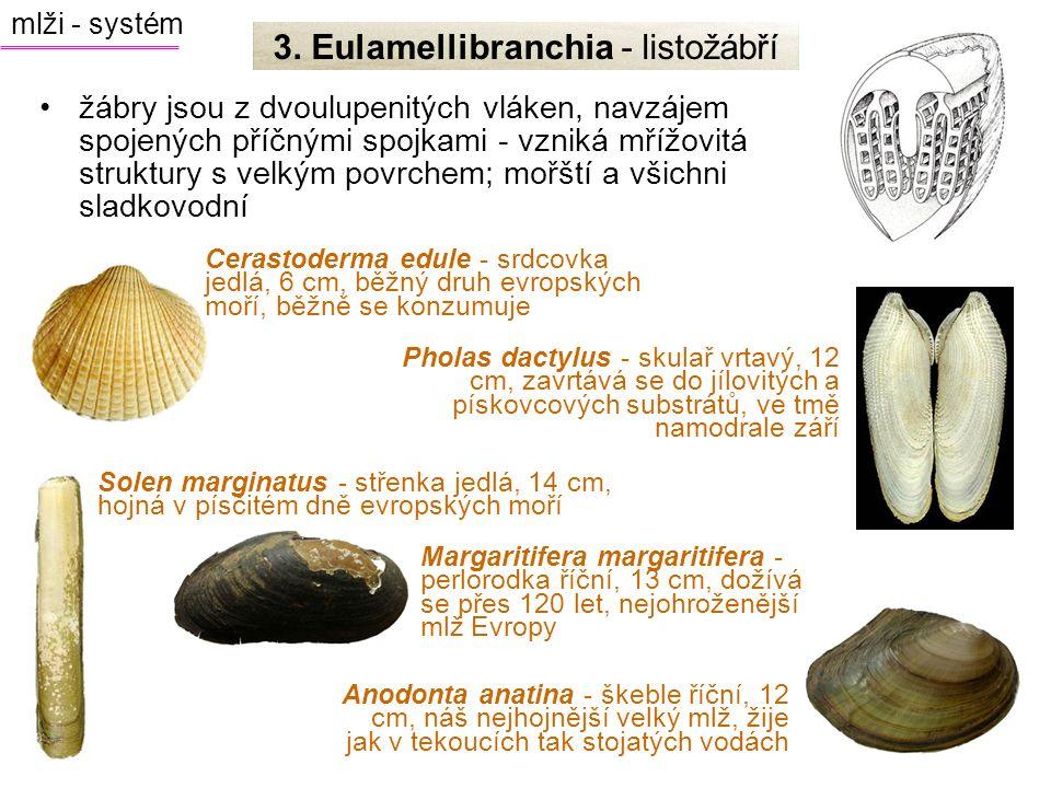 3. Eulamellibranchia - listožábří