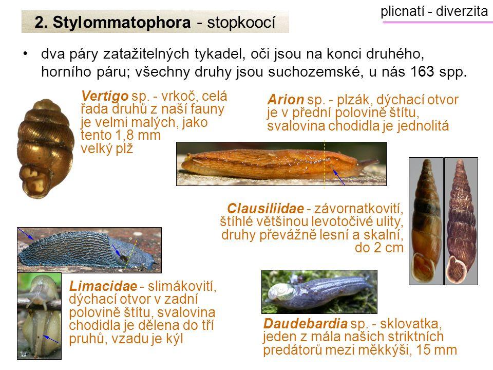 2. Stylommatophora - stopkoocí