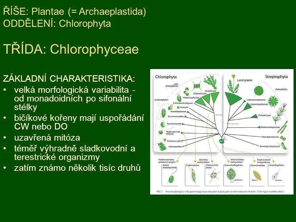 ŘÍŠE: Plantae (= Archaeplastida) ODDĚLENÍ: Chlorophyta TŘÍDA: Chlorophyceae