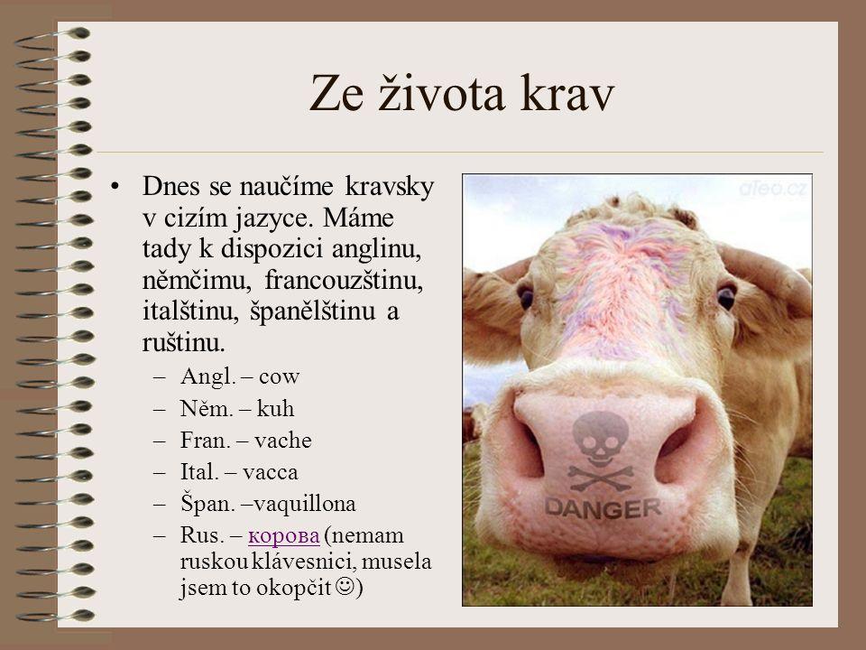 Ze života krav Dnes se naučíme kravsky v cizím jazyce. Máme tady k dispozici anglinu, němčimu, francouzštinu, italštinu, španělštinu a ruštinu.