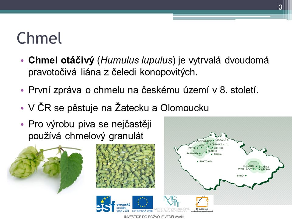 Chmel Chmel otáčivý (Humulus lupulus) je vytrvalá dvoudomá pravotočivá liána z čeledi konopovitých.