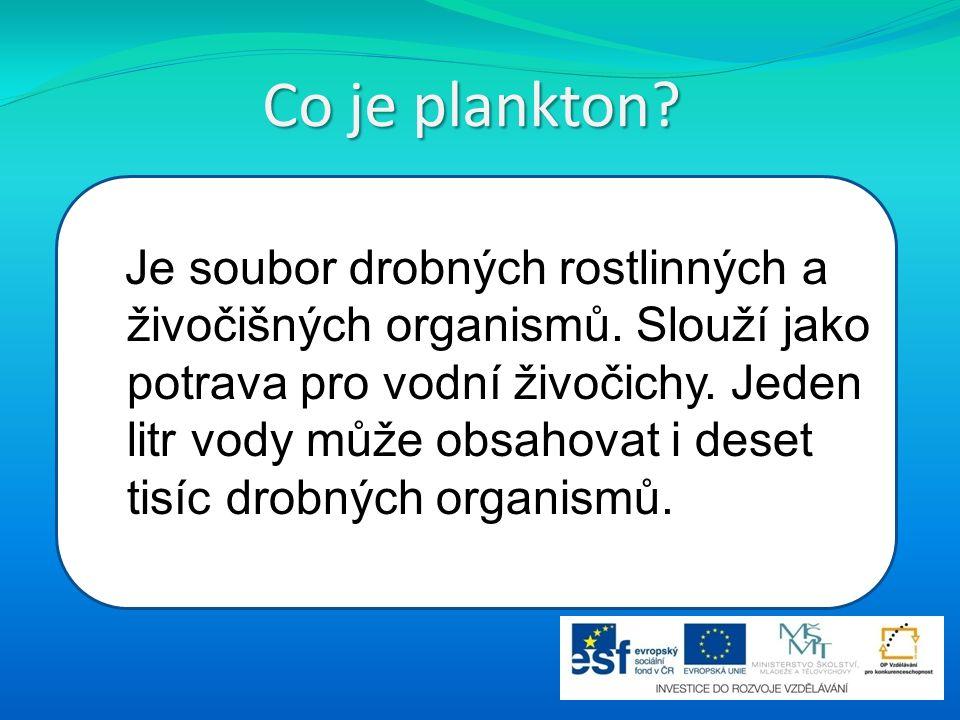 Co je plankton