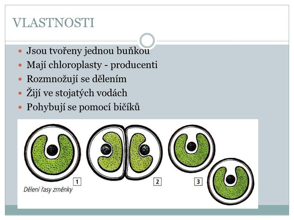 VLASTNOSTI Jsou tvořeny jednou buňkou Mají chloroplasty - producenti
