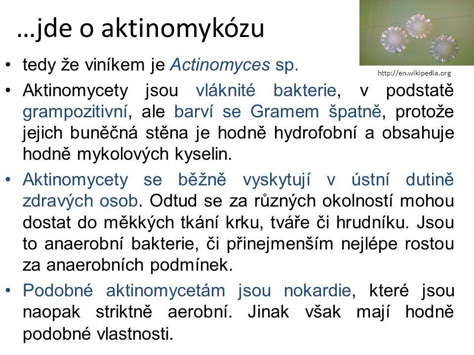 …jde o aktinomykózu tedy že viníkem je Actinomyces sp.