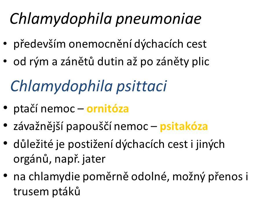Chlamydophila pneumoniae