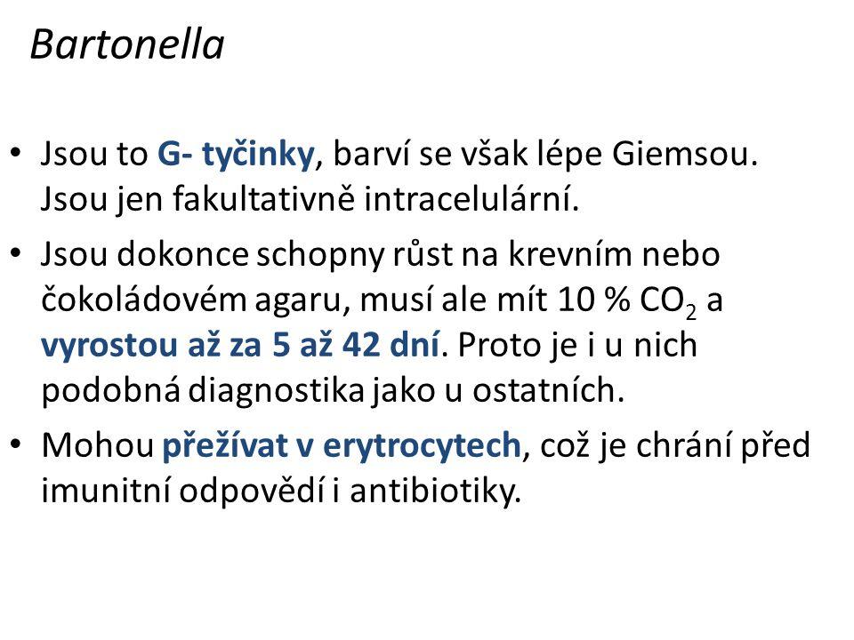 Bartonella Jsou to G- tyčinky, barví se však lépe Giemsou. Jsou jen fakultativně intracelulární.