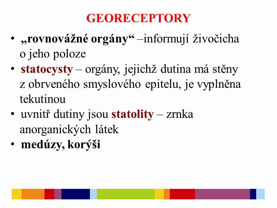 """GEORECEPTORY """"rovnovážné orgány –informují živočicha. o jeho poloze. statocysty – orgány, jejichž dutina má stěny."""