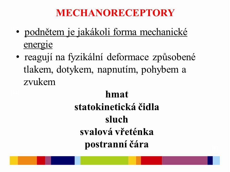 podnětem je jakákoli forma mechanické energie