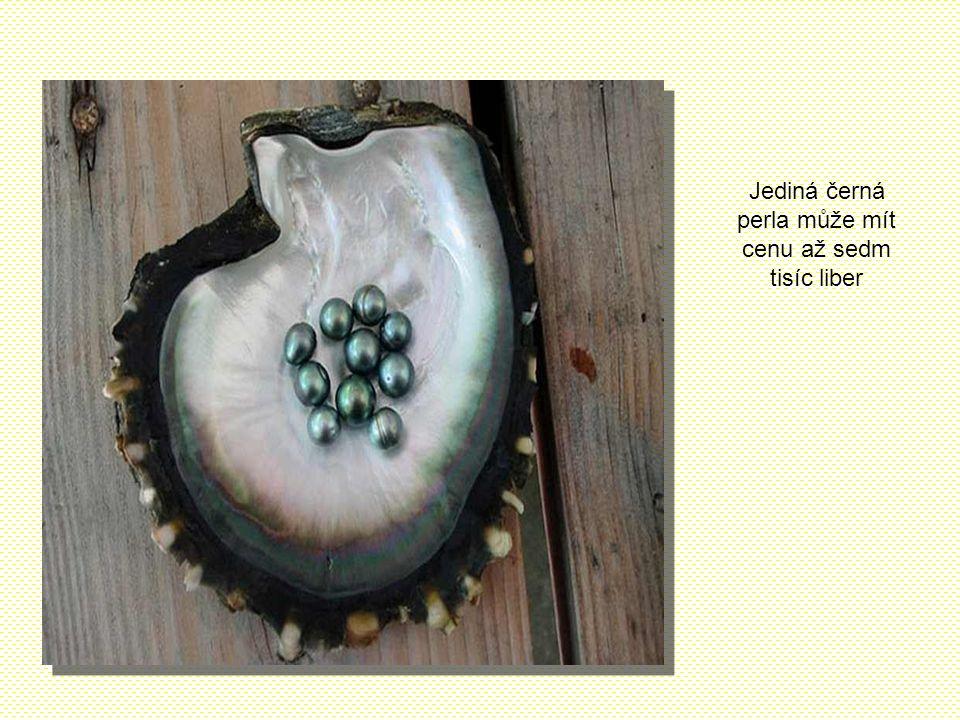 Jediná černá perla může mít cenu až sedm tisíc liber