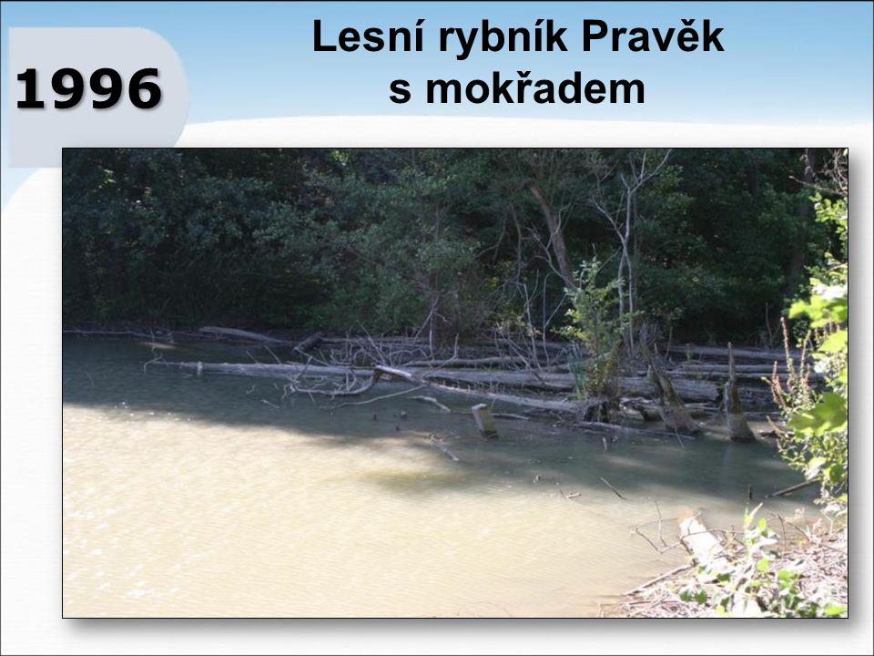 Lesní rybník Pravěk s mokřadem