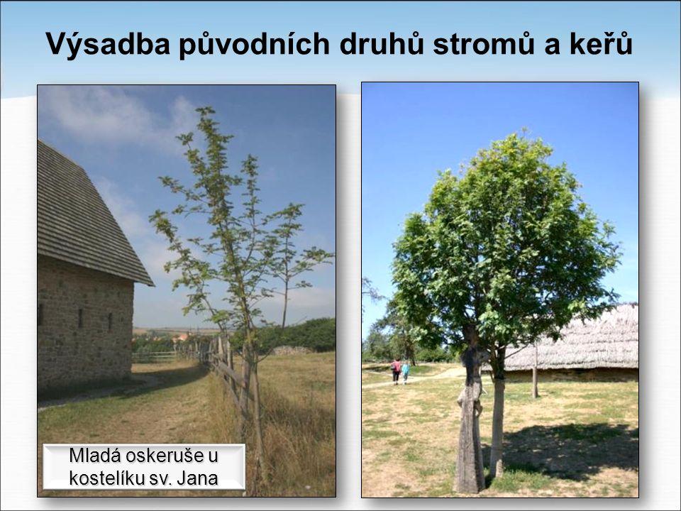 Výsadba původních druhů stromů a keřů