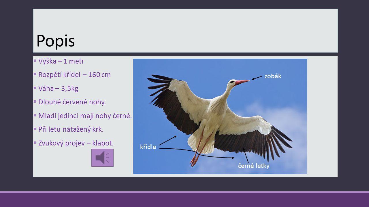 Popis Výška – 1 metr Rozpětí křídel – 160 cm Váha – 3,5kg
