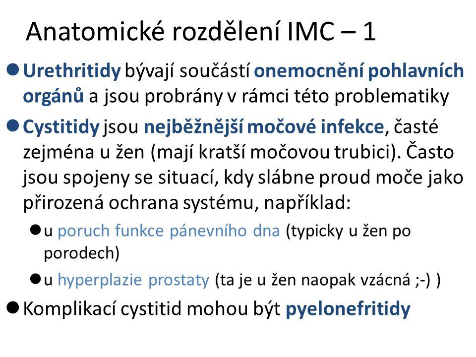 Anatomické rozdělení IMC – 1
