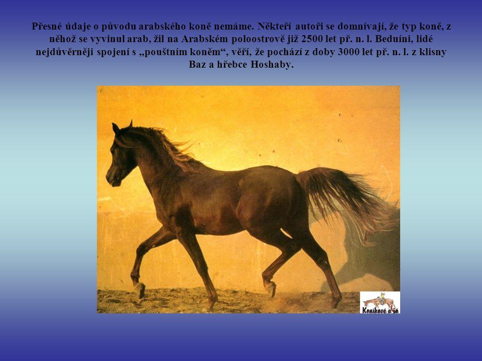 Přesné údaje o původu arabského koně nemáme