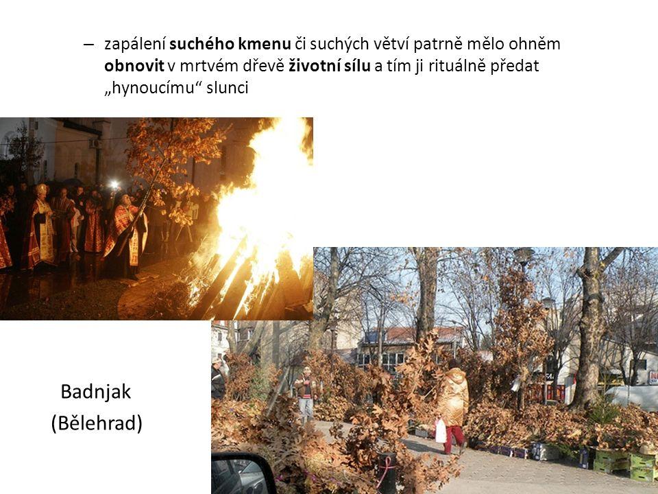 """zapálení suchého kmenu či suchých větví patrně mělo ohněm obnovit v mrtvém dřevě životní sílu a tím ji rituálně předat """"hynoucímu slunci"""
