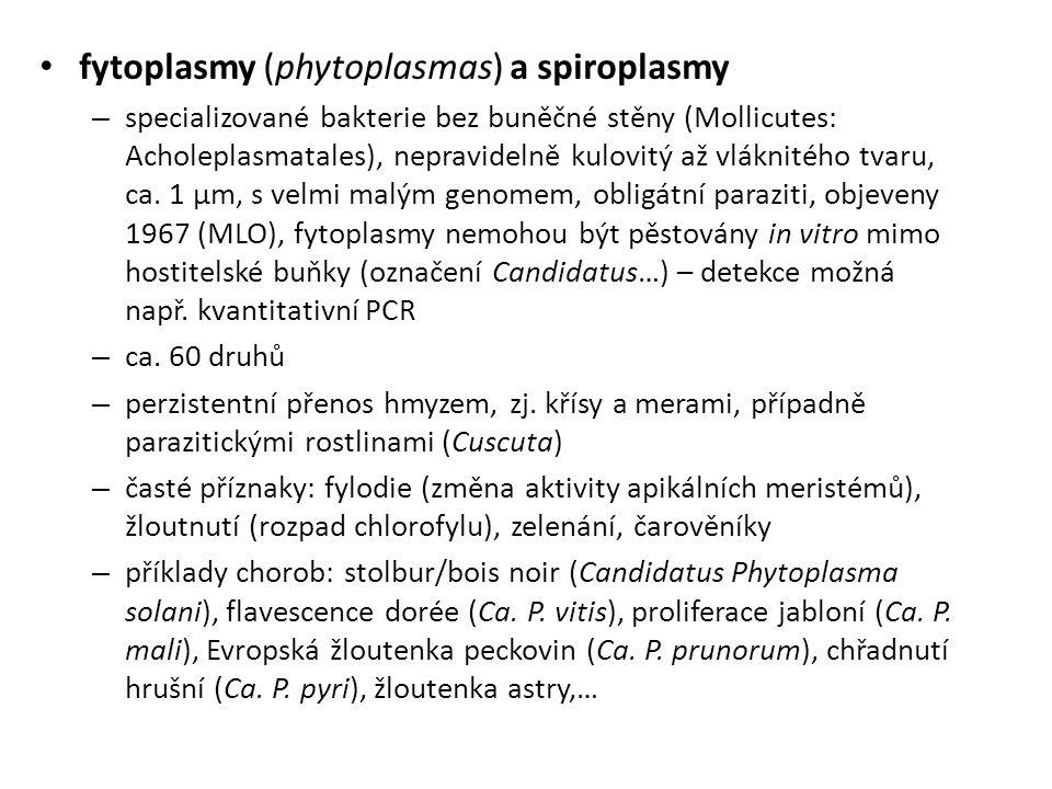 fytoplasmy (phytoplasmas) a spiroplasmy