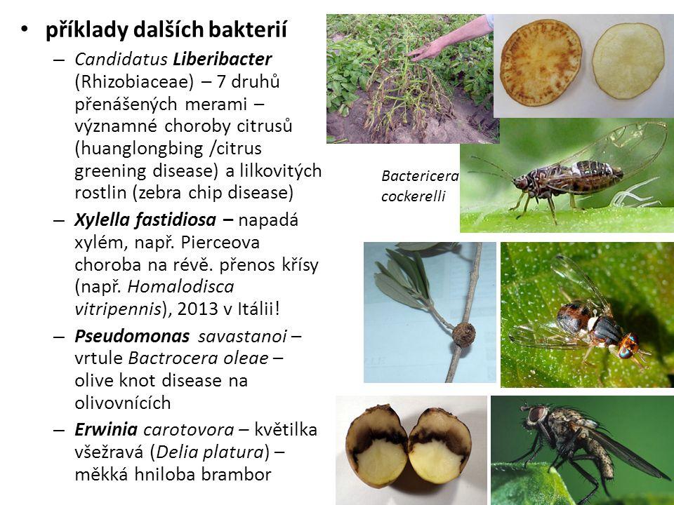 příklady dalších bakterií