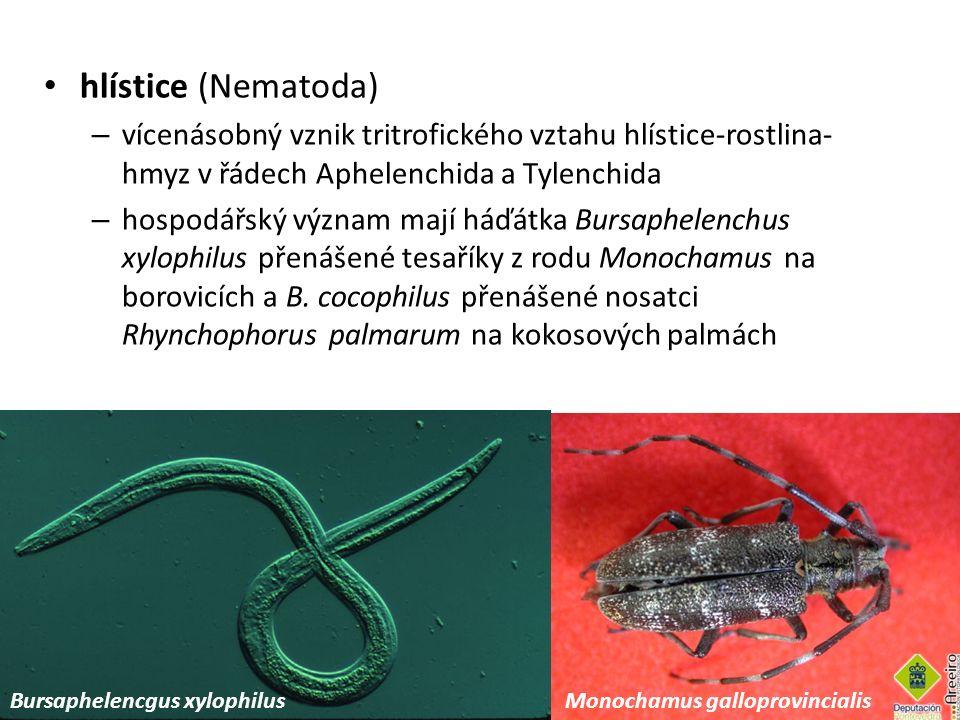hlístice (Nematoda) vícenásobný vznik tritrofického vztahu hlístice-rostlina-hmyz v řádech Aphelenchida a Tylenchida.