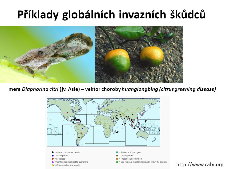 Příklady globálních invazních škůdců