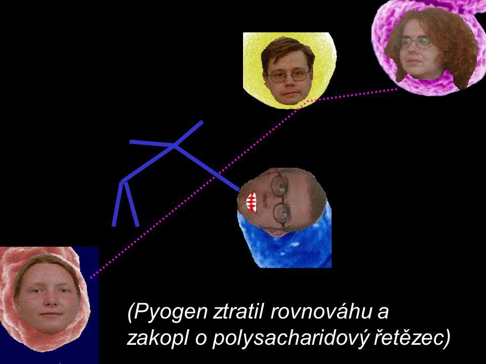 (Pyogen ztratil rovnováhu a zakopl o polysacharidový řetězec)