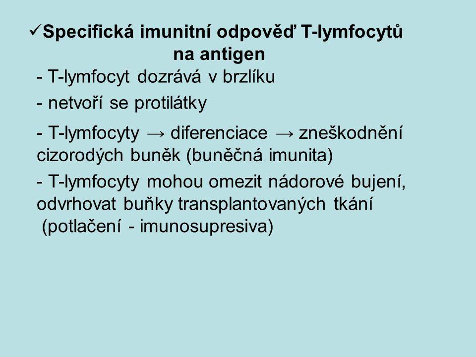Specifická imunitní odpověď T-lymfocytů