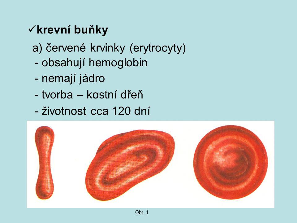 a) červené krvinky (erytrocyty) - obsahují hemoglobin - nemají jádro