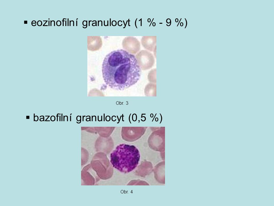 eozinofilní granulocyt (1 % - 9 %)