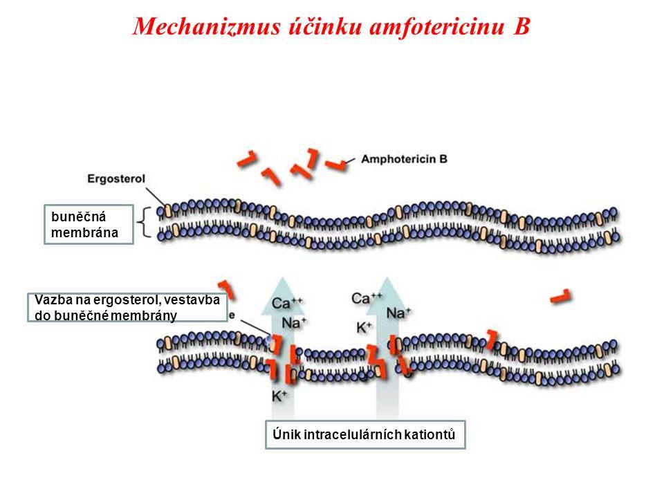 Mechanizmus účinku amfotericinu B