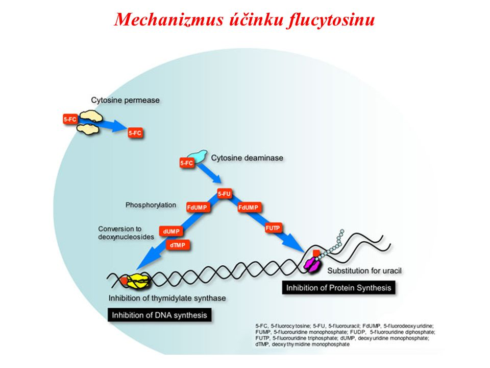 Mechanizmus účinku flucytosinu