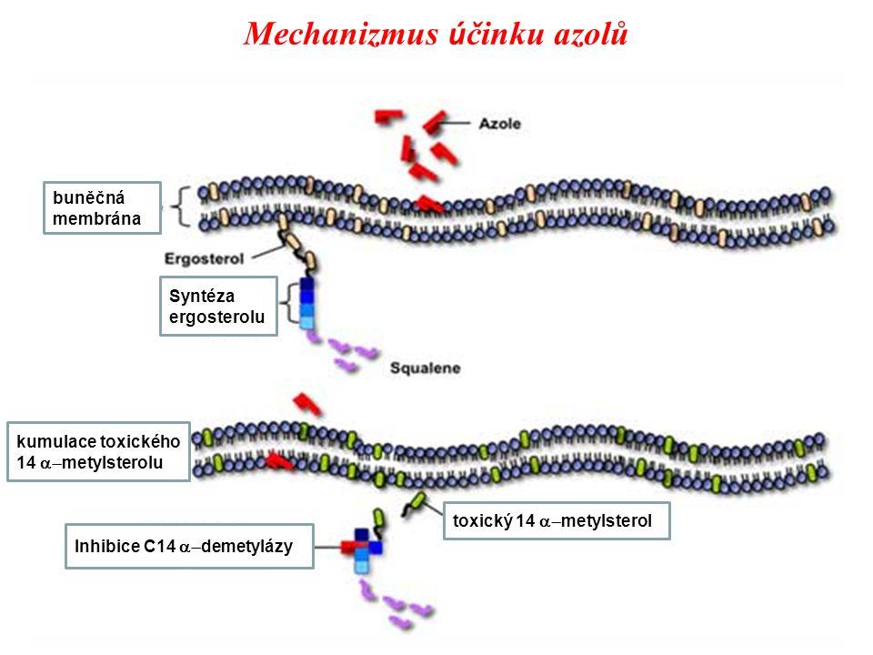 Mechanizmus účinku azolů
