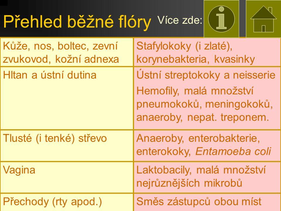 Přehled běžné flóry Více zde: