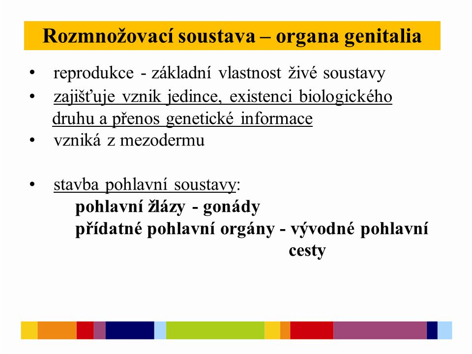 Rozmnožovací soustava – organa genitalia