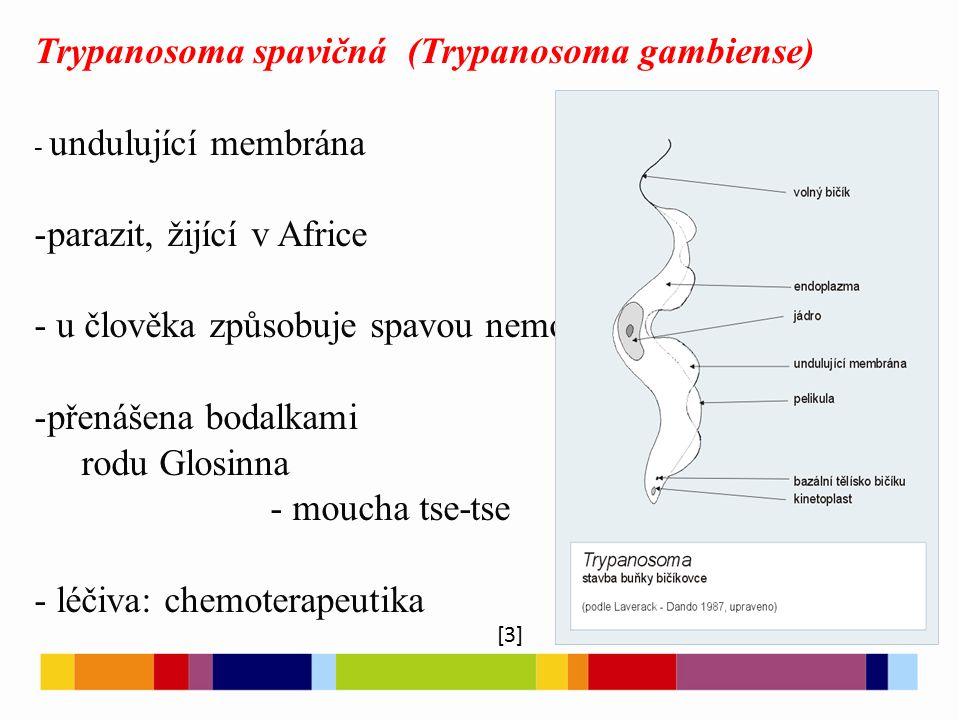 Trypanosoma spavičná (Trypanosoma gambiense)