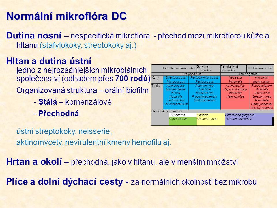Normální mikroflóra DC
