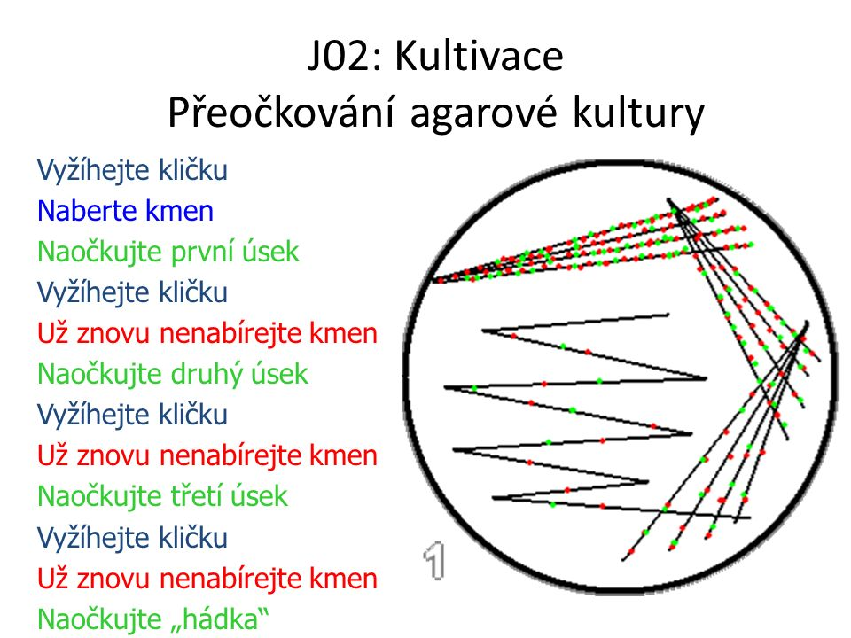 J02: Kultivace Přeočkování agarové kultury