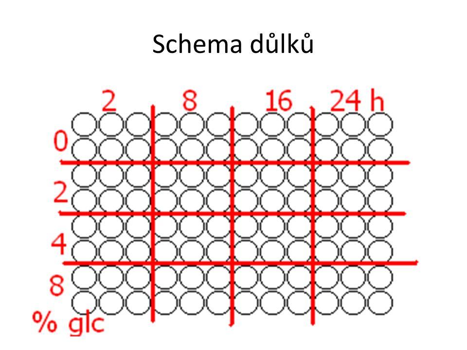 Schema důlků