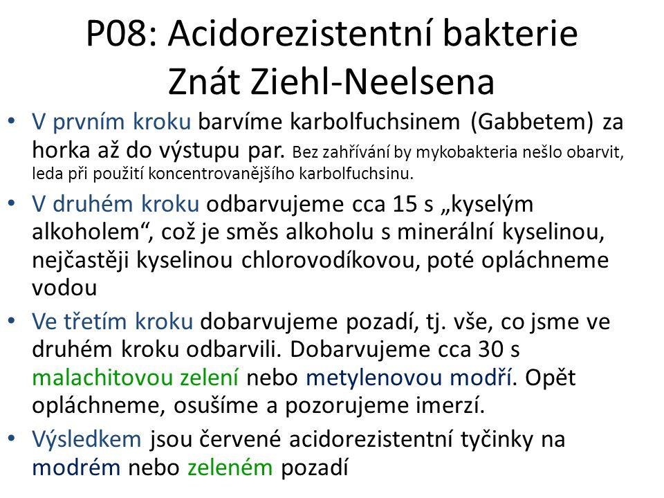 P08: Acidorezistentní bakterie Znát Ziehl-Neelsena