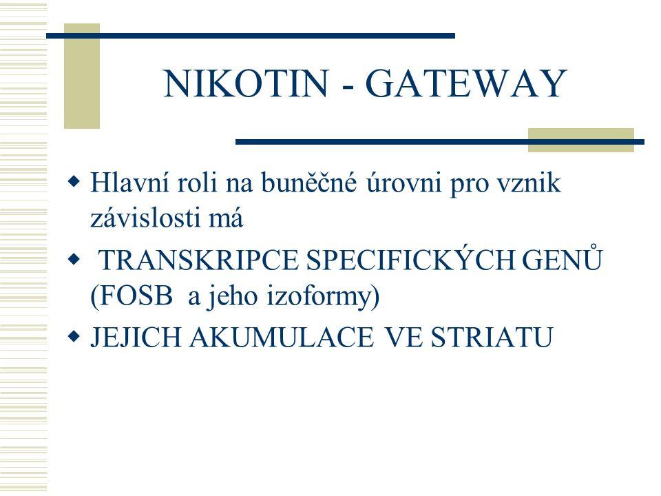 NIKOTIN - GATEWAY Hlavní roli na buněčné úrovni pro vznik závislosti má. TRANSKRIPCE SPECIFICKÝCH GENŮ (FOSB a jeho izoformy)