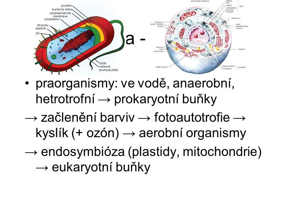 3. etapa - buněčná praorganismy: ve vodě, anaerobní, hetrotrofní → prokaryotní buňky.