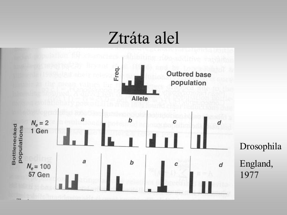 Ztráta alel Drosophila England, 1977