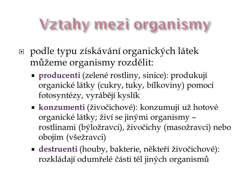 Vztahy mezi organismy podle typu získávání organických látek můžeme organismy rozdělit: