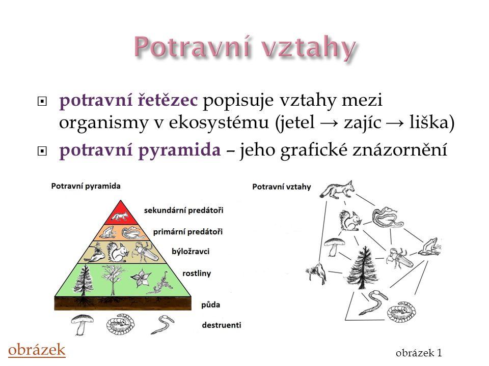 Potravní vztahy potravní řetězec popisuje vztahy mezi organismy v ekosystému (jetel → zajíc → liška)