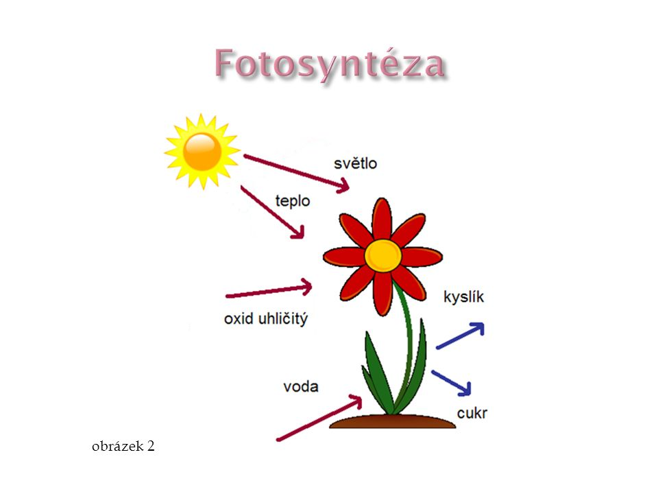 Fotosyntéza obrázek 2