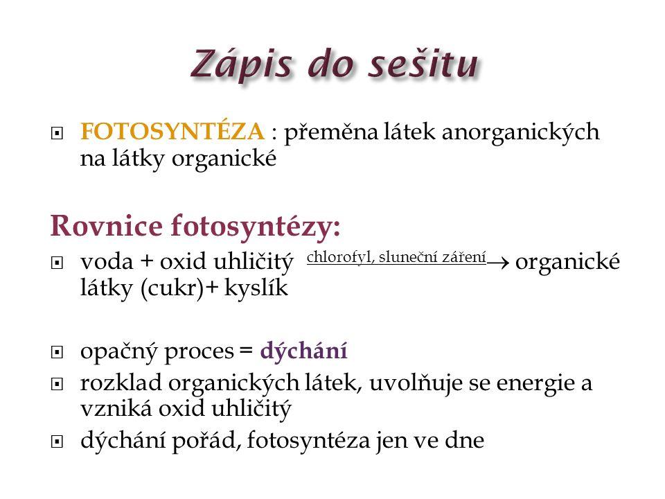 Zápis do sešitu Rovnice fotosyntézy: